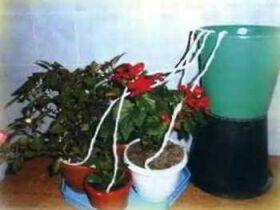 Капельный полив для домашних цветов своими руками