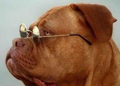Как на собаке смотряться солнцезащитные очки