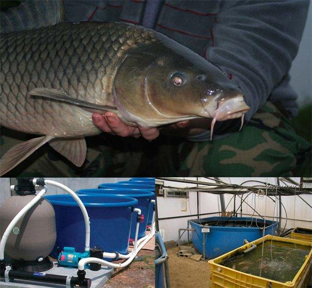 Расходы и доходы от разведения рыбки