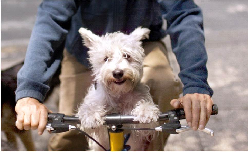 Седло для сабаки на велосипеде