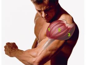 Как накачать передние и задние дельты, фото