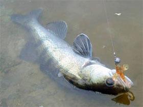 Как правильно ловить на поролоновую рыбку, фото