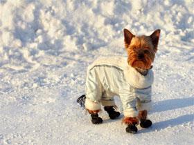 Как правильно одеть собаку, фото