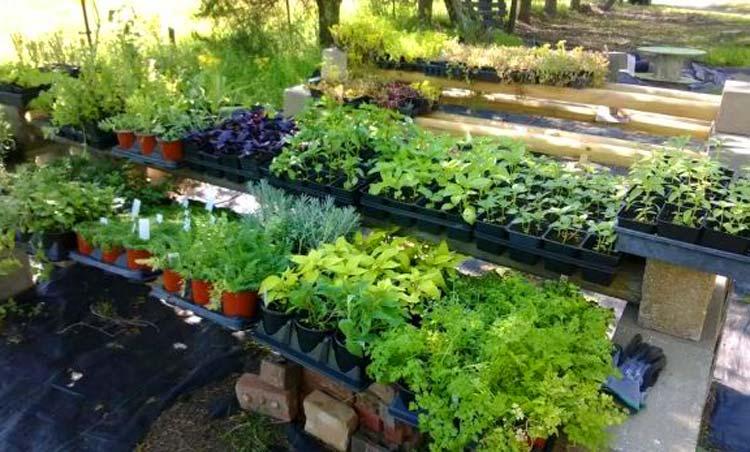 Анализ рынка выращивания зелени
