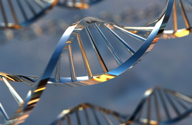 ДНК – тестирования кошек у кошки