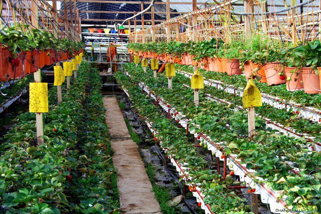 Помещение в котором выращивается клубника