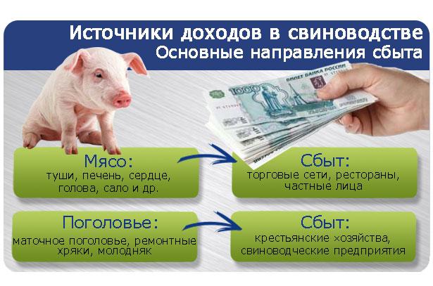 Основные направления сбыта свиного мяса