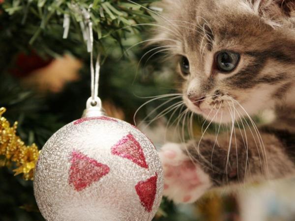 Ставим елку, если в доме есть дети или животные