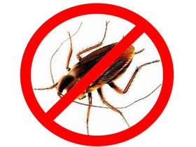 Как избавиться от тараканов навсегда, фото
