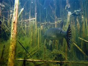 Ловля в водоеме на мертвую рыбку и резину, фото