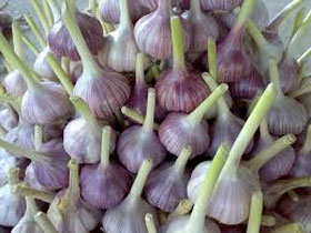 Уборка чеснока в огороде, фото